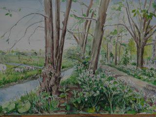 Bomenwandeling Mariahoeve